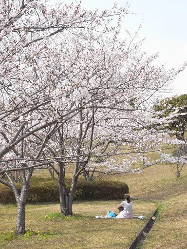 5大高緑地公園の桜