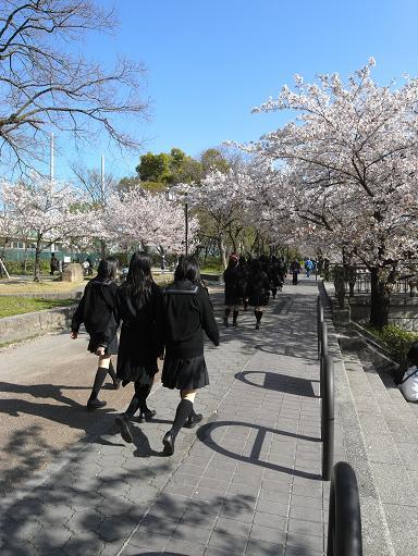 2山崎川の桜