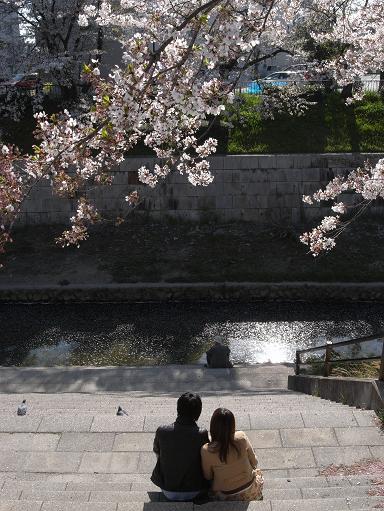 4山崎川の桜